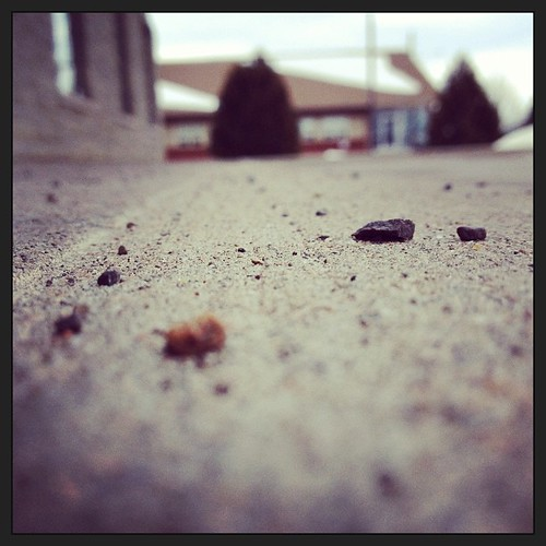 Feb 19 - close to the ground {literally; the sidewalk outside of my office} #photoaday