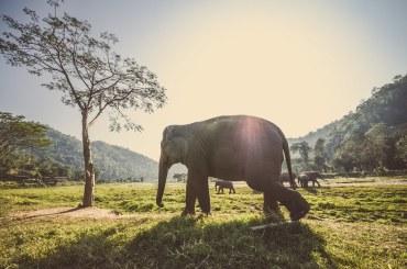 「商用フリー 画像 ゾウ」の画像検索結果