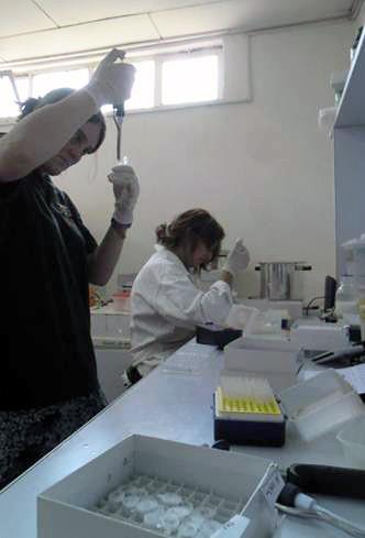 Preparing samples for ELISA testing