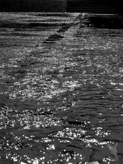 賀茂川の飛び石