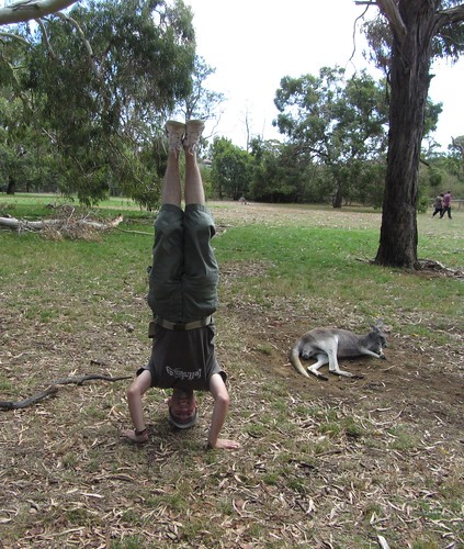 20. cleland wildlife park headstand