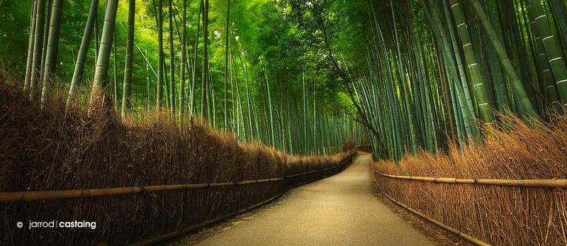 Japan - Kyoto - Bamboo Grove
