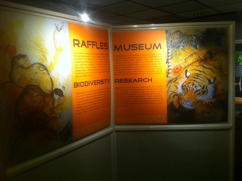 08_mw5202-RafflesMuseum-28mar2013