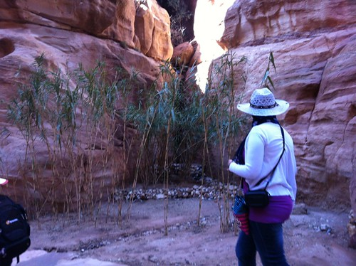 Plants in Petra, enjoying a bit of flat dirt (February 2013)