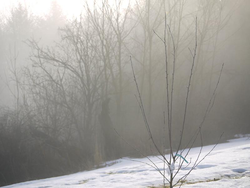 March fog