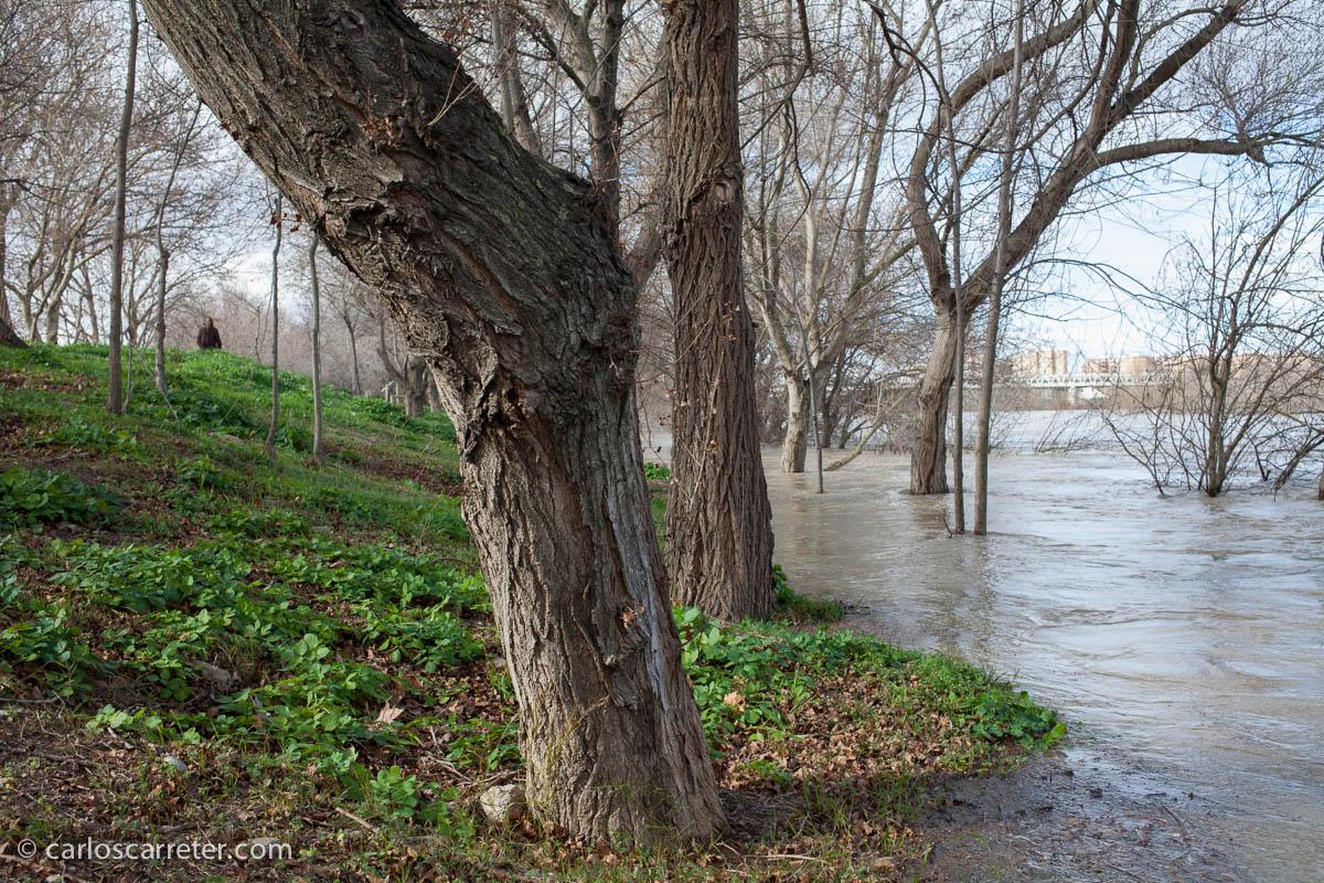 Avenida del Ebro - En torno al Puente del Ferrocarril