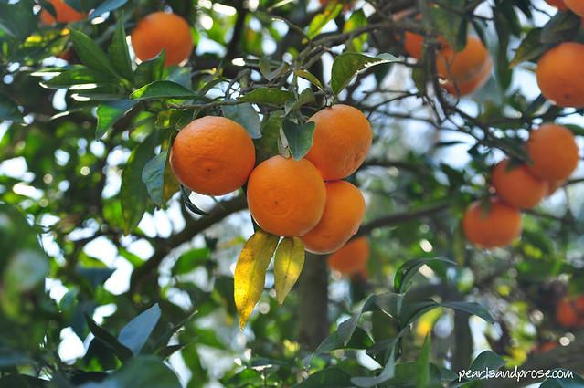 carillo_oranges_web