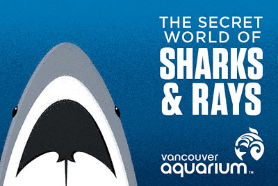 Sharks&Rays_WebGraphic