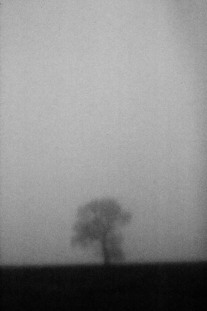 A foggy day....