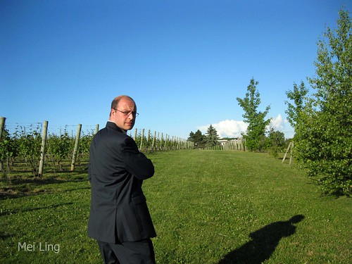 Dan walking through the vineyard