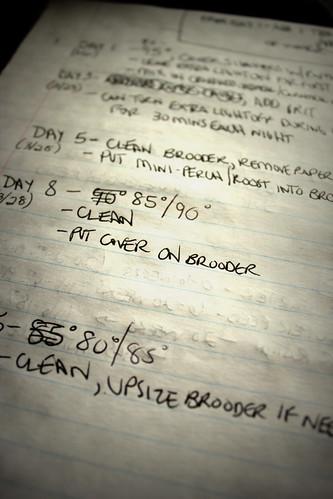 20130303. New chick checklist.