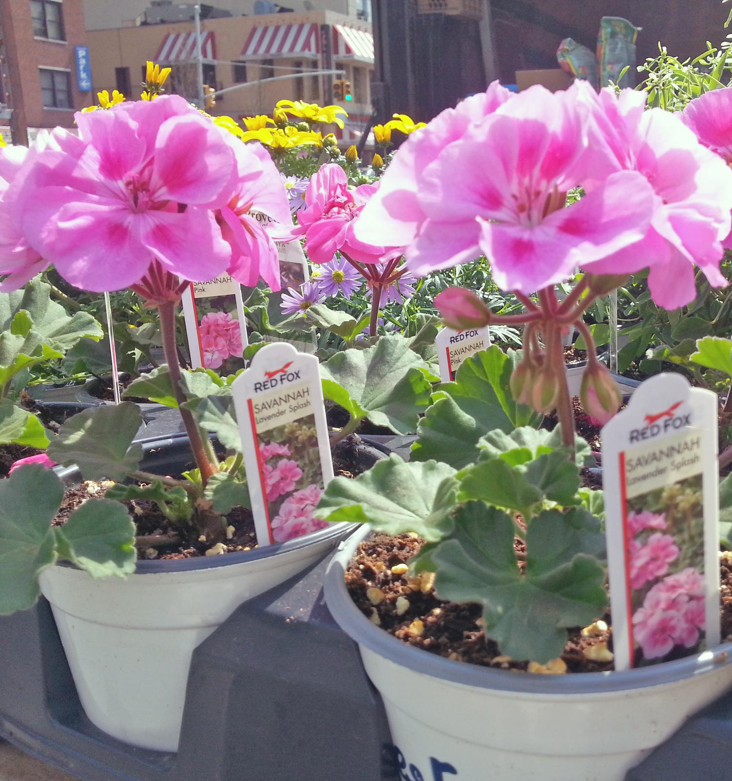 usq-flowers-8