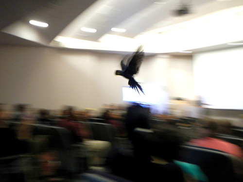 and then the macaw flew across the room and my camera took a shitty picture of it