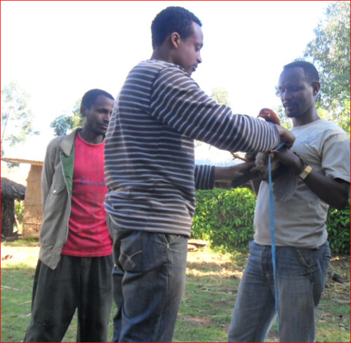 Eskinder Aklilu, Masters student, CH4D project