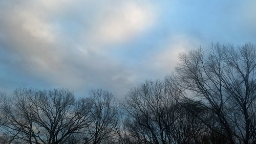 Bare Trees in January