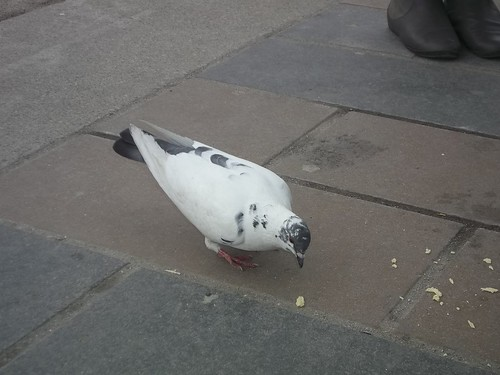 Pigeon on St. Clair (1)