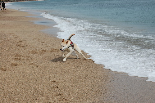 Llamp - Primera excursión a la playa.