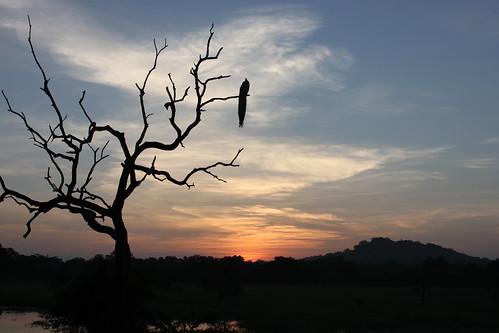 20130121_8197-Yala-sunrise