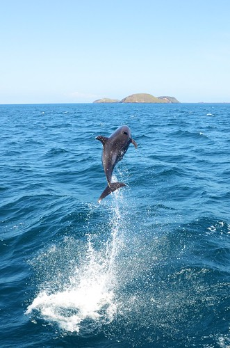 Dolphin spin