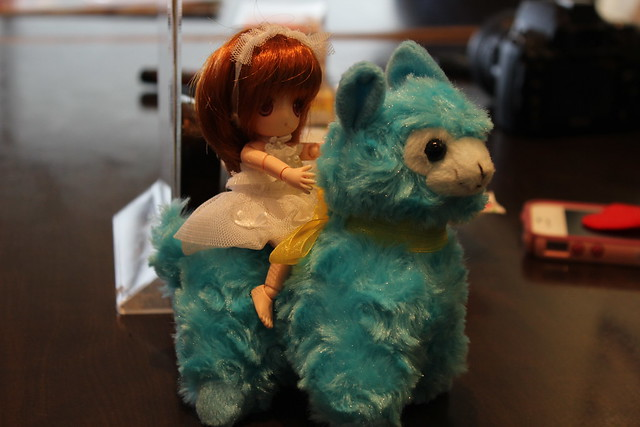 Dot riding an alpaca!