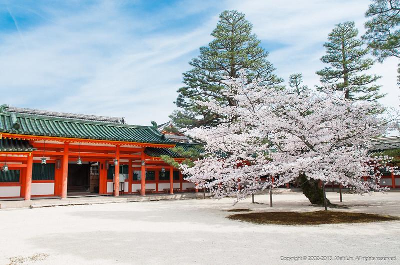 【日本|關西|京都】盛開的八重枝垂櫻.平安神宮.京都市立美術館