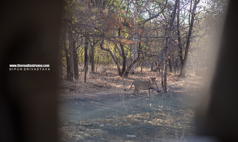 Gir and Gujarat