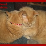 Salem and Sirbrina