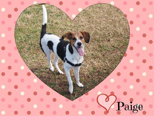 Paigeheart