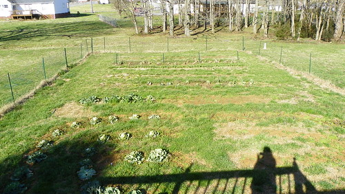 garden in early spring