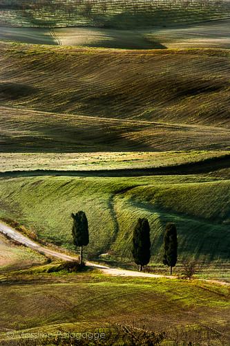 Cipressi in Toscana by Massimo Pelagagge