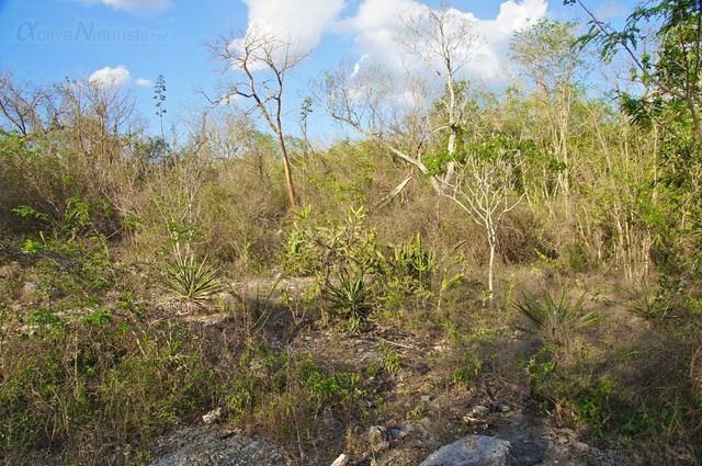naturist 0005 cenotes near Merida, Yucatan, Mexico