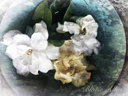 Gardenia with texture