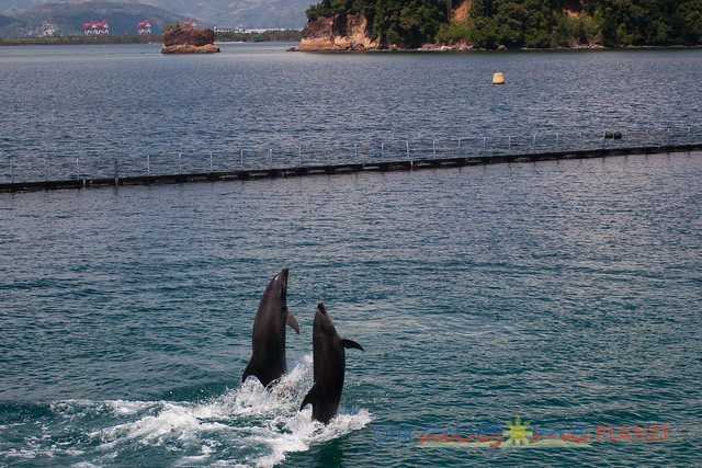 Dolphin and Whale Show-12.jpg