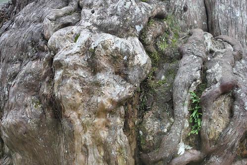 20130118_7732-tree-bark-texture