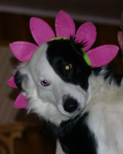 Daisy-Head Dog