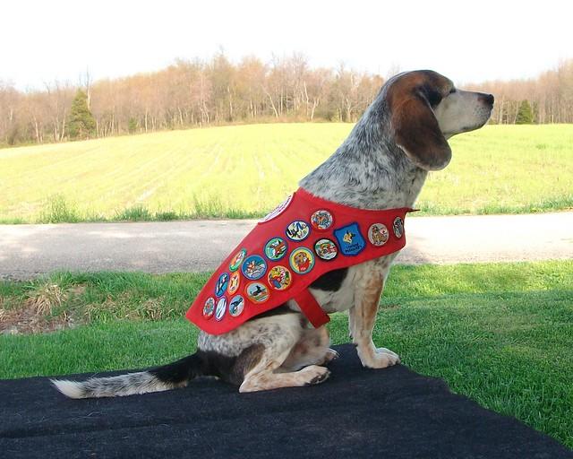 Bear in uniform- 31 badges