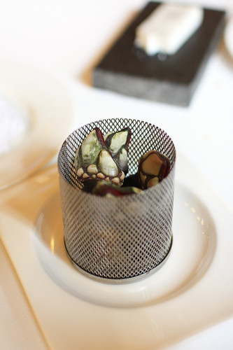 Course 4: Goose barnacles