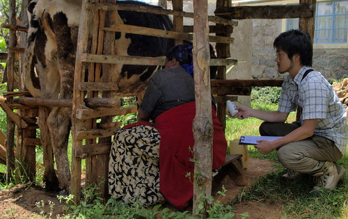 ILRI graduate fellow Taishi Kayano collects milk samples from a Kenyan dairy farm