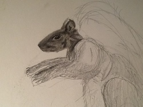 Squirrel preliminary sketch by gnawledge wurker
