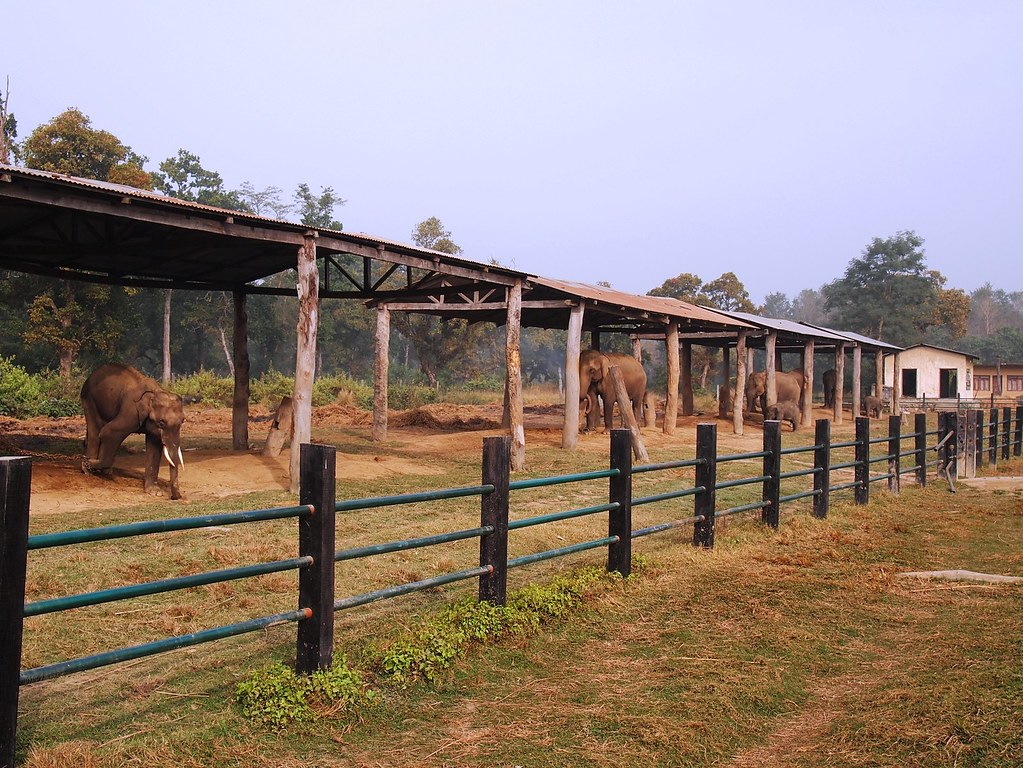 chitwan national park + elephant breeding center