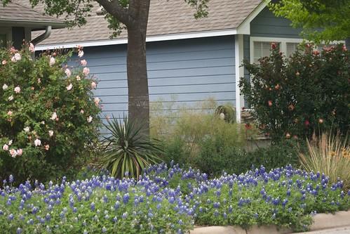 Front Yard Spring 2013