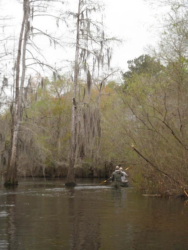 The Big Little River Paddle RAce course winds through cypress trees