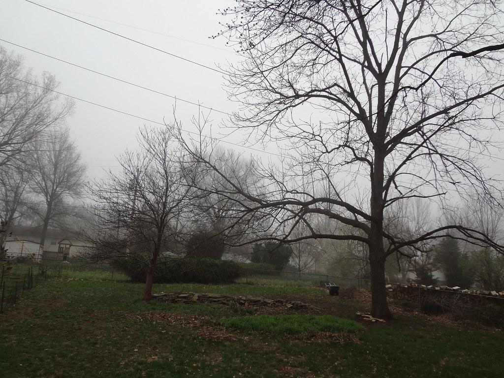 fog_1