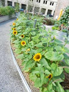gardens 756