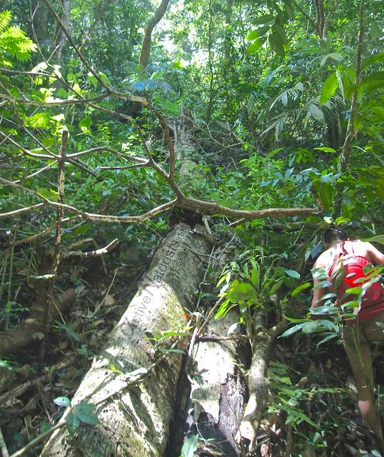 naturist 0002 Palenque, Chiapas, Mexico