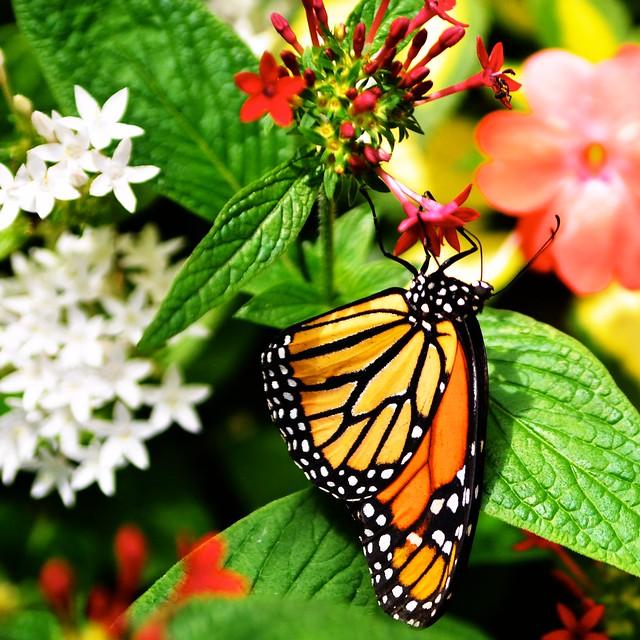 Butterfly #9