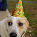 Allic's 1st birthday party