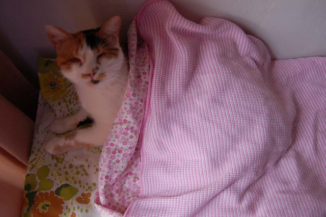 Sweet Pea all snuggled up under her blankets