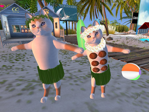 Hula Cats