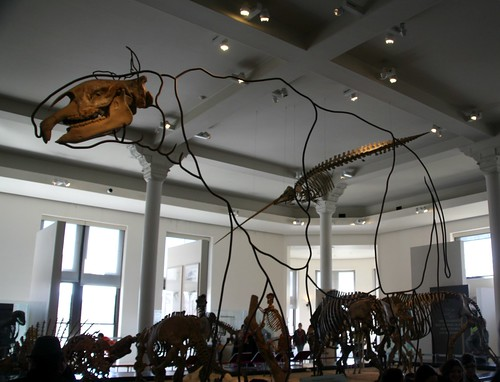2013: American Museum of Natural History, New York #36